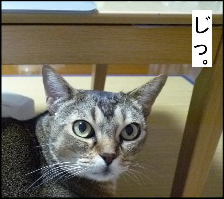としお君ネコ1