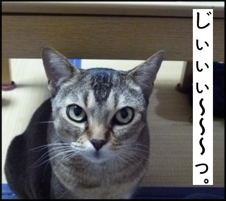 としお君ネコ3