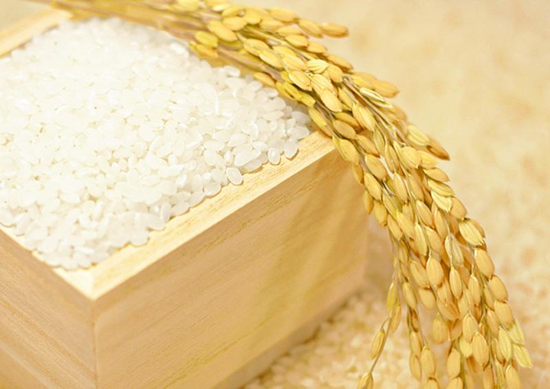 稲とお米のトップイメージ
