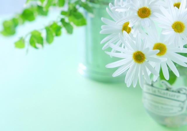 観葉植物とお花イメージ