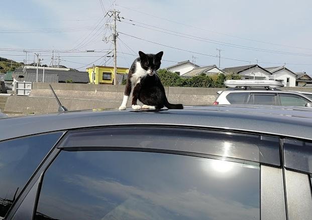 車の上でくつろぐねこ20191103
