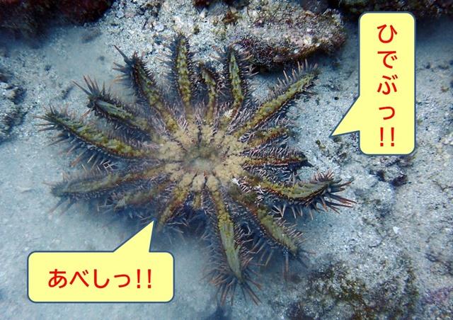 オニヒトデ セリフ付き20200112web