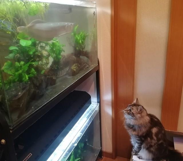水槽を見るレオン2web