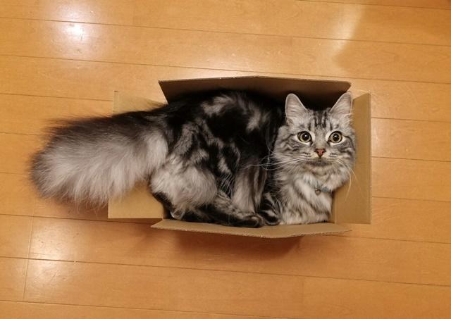 この箱は少し小さいweb