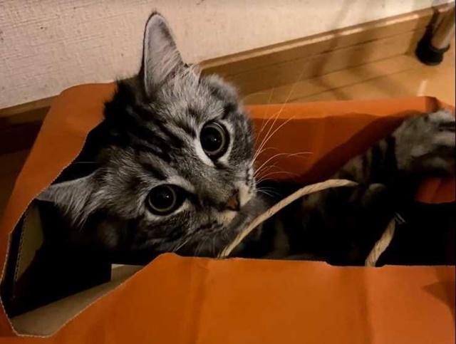 袋に入るのも好きweb