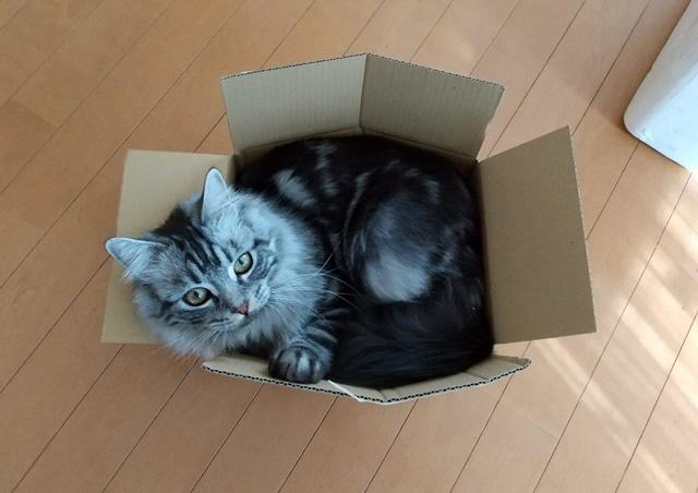 この箱は小さすぎるweb