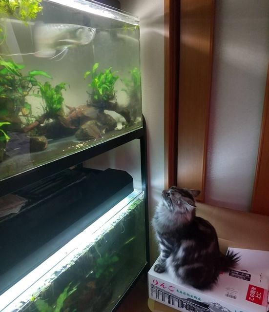 水槽を見るレオン3web