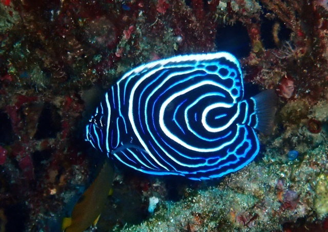 タテキン幼魚20200215web