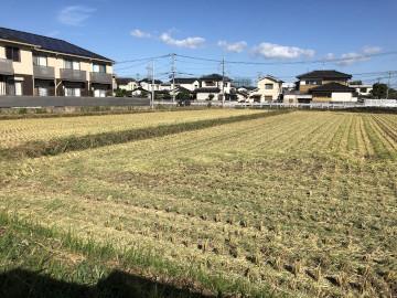 畝立てと稲刈り12