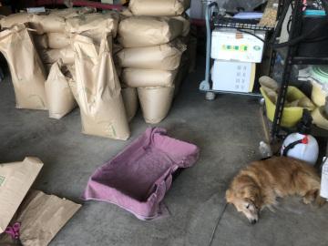 れんげ米もみすりと農園準備11