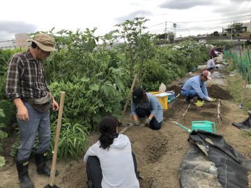 農園苗植え雨ギリギリ