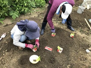 農園苗植え雨ギリギリ2