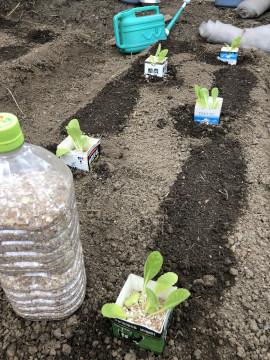 農園苗植え雨ギリギリ3