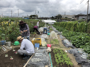 農園苗植え雨ギリギリ4