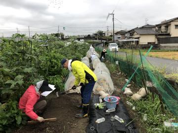 雨の後の苗植え作業2