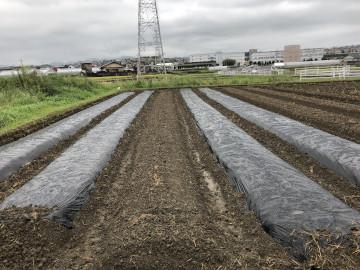 雨の後の苗植え作業3