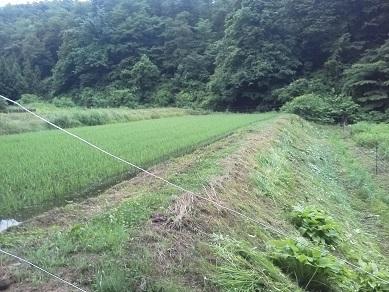 のり面草刈り