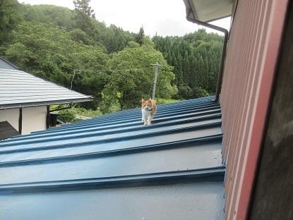 屋根の上に2