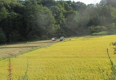 稲刈り 始まる 2