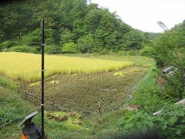 稲刈り準備 2