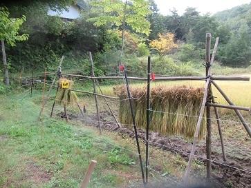 稲刈り準備 3