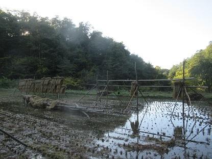 田んぼハセ3