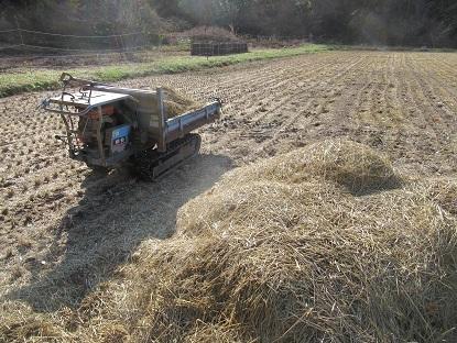 稲わらを散らす