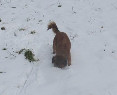 雪とコロン