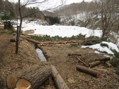 木の伐採処理