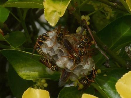 ハチと蜂の巣 1