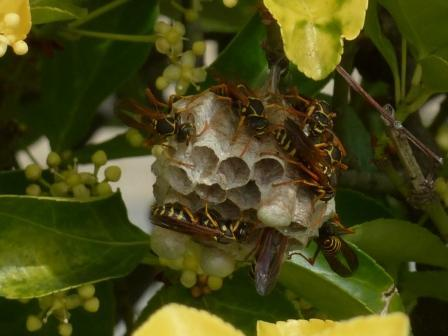 ハチと蜂の巣 2
