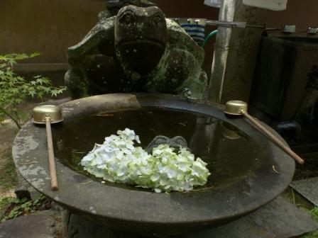 浄瑠璃寺 紫陽花 12