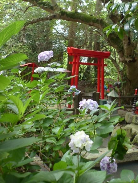 浄瑠璃寺 紫陽花 11