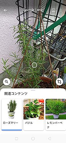 02_24-73googlelenz.jpg