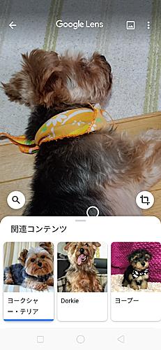 03_23-27googlelenz.jpg