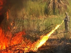 Flame_Thrower_Iraq_R.jpg