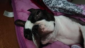 犬の咳と定期健診