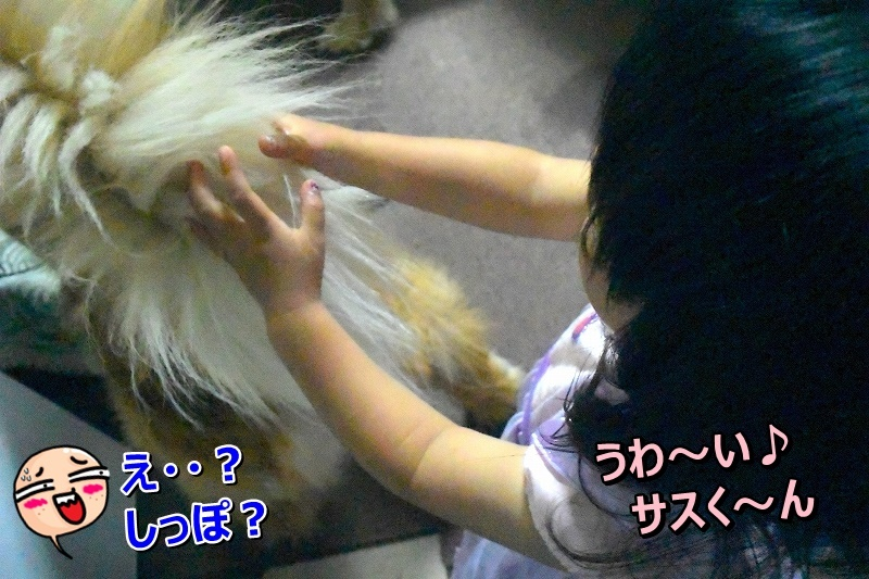 DSC_6684尻尾ふわふわ~