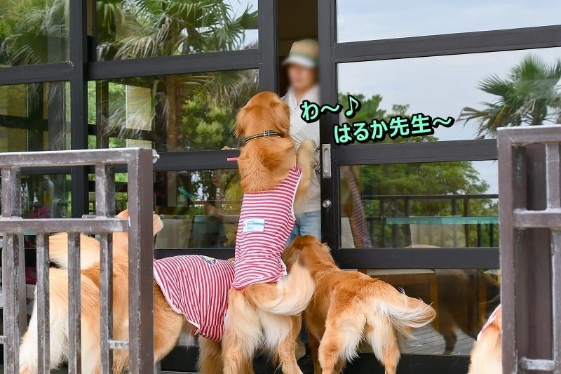 DSC_6604せんせ~い