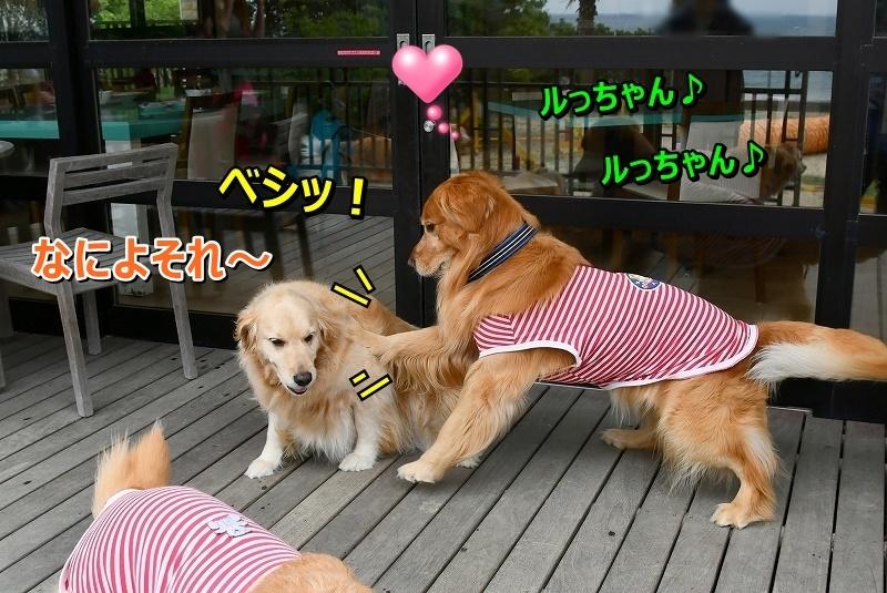 DSC_6609べし