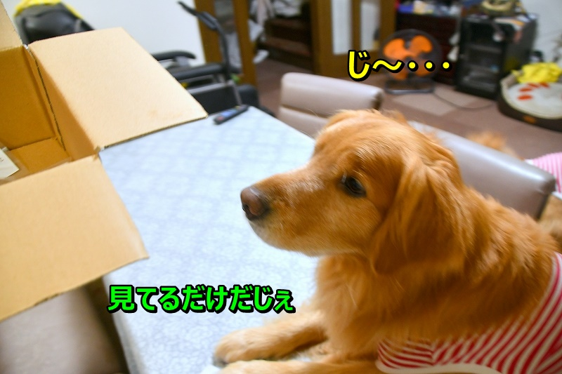 DSC_6968じ~