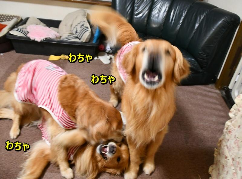 DSC_6979大暴れ