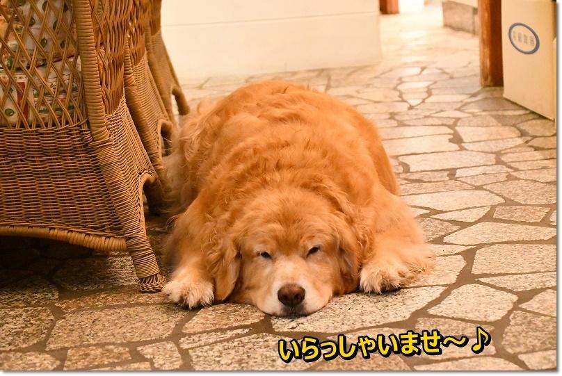 DSC_7470シナモンちゃん