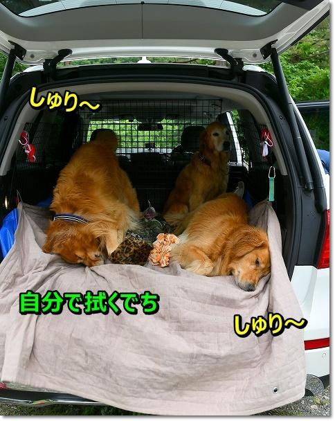 DSC_7703しゅりsりゅり~