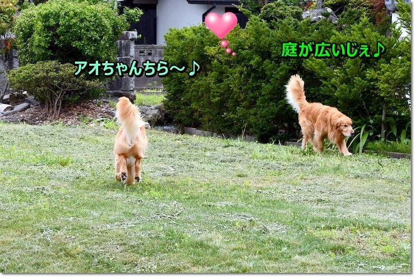 DSC_7710アオちゃんちのお庭ら~