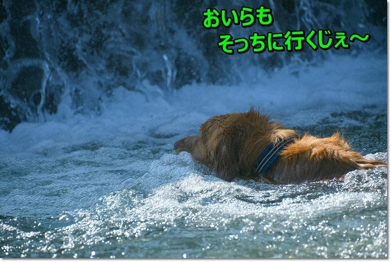 DSC_7916て~へんだ~