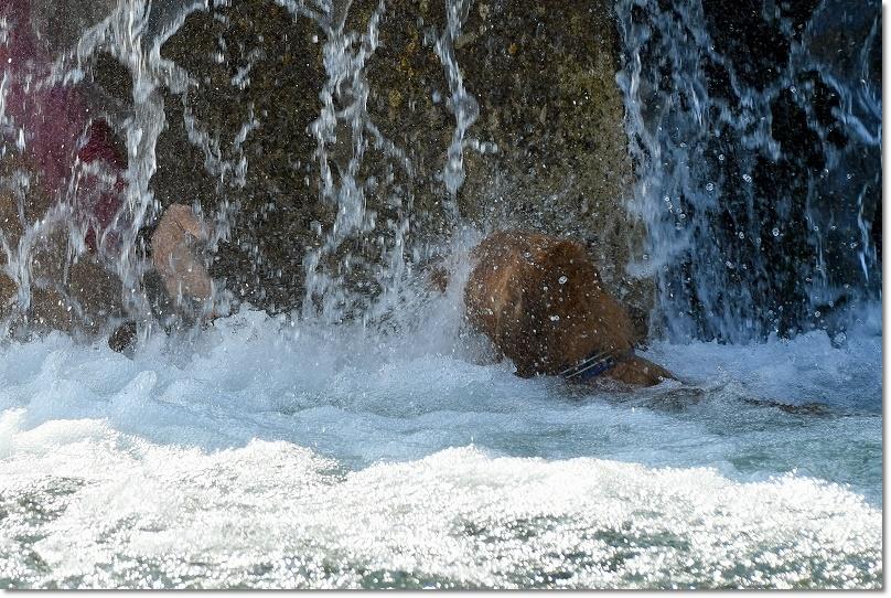 DSC_7921強い滝に打たれても