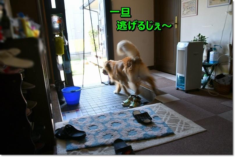 DSC_8162逃げるじぇ~