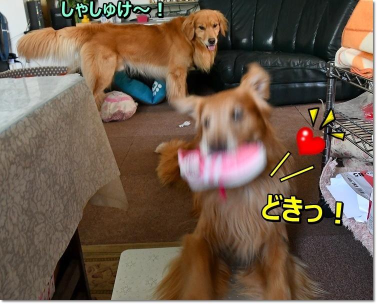DSC_8177みっけ~ どきっ!