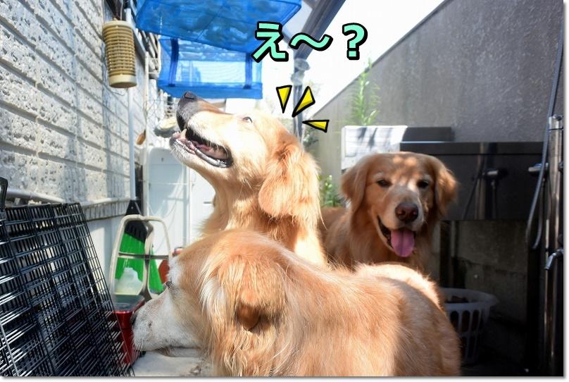 DSC_6899え~??